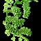 Alghe e calorie , quali sono e proprietà